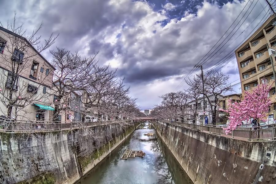 東京 石神井川3月10日