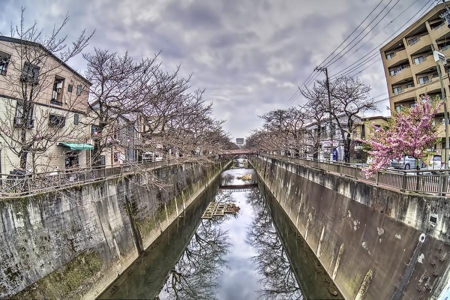 東京 石神井川 3月20日