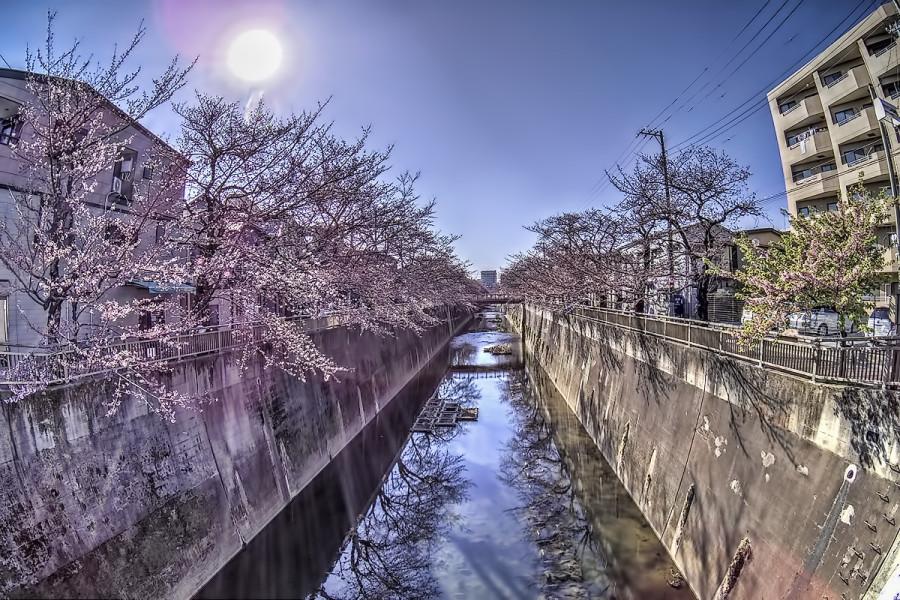 東京 石神井川 3月26日