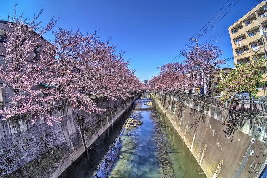 東京 石神井川 3月27日